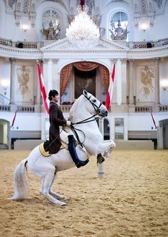 Be impressed by the performance of the famous Lipizzaner in a breathtaking location, the baroque Winter Riding School. The unique atmosphere of this place and the accompanying classic Viennese music will make this experience unforgettable. Lippizaner, Lipizzan, Riding Hats, Horse Riding, Trail Riding, Spanish Riding School Vienna, Munich, Dressage Horses, Equestrian Outfits