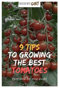 Tomato Gardening For Beginners So you want to grow the best tomatoes this year? Well this guide reveals the 9 secrets used by expert tomato growers around the world. You'll learn exactly how to grow tomatoes with incredible flavor and productivity. Tips For Growing Tomatoes, Growing Tomato Plants, Growing Tomatoes In Containers, Grow Tomatoes, Cherry Tomatoes, Container Vegetables, Planting Vegetables, Growing Vegetables, Container Gardening