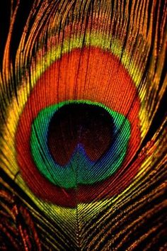 Peacock feather this has a lote of colours Peacock Colors, Peacock Art, Peacock Feathers, Painting Of Peacock, Vibrant Colors, Colorful, Patterns In Nature, Textures Patterns, Desenho Pop Art