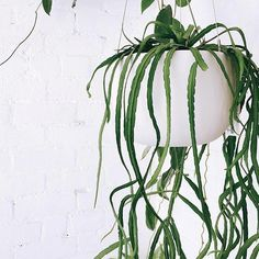 Raw Earth Hanging Planter - Chalk White– Pigment Large Hanging Planters, Hanging Plants, Hanging Gardens, Bathroom Plants, Modern Spaces, Indoor Garden, Houseplants, Plant Leaves, Earth
