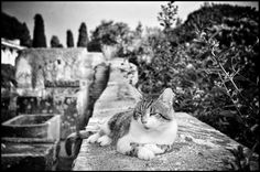 Many cats live in the archeological ruins of Ostia