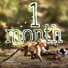 One month until you can see these monkeys in action! In theatres April 17. #MonkeyKingdom