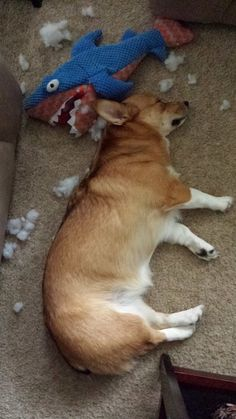 Destroying toys is tough work!