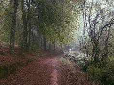 forest by hanneke schutte