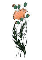poppy floral pattern