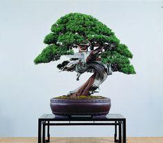 Cheng,cheng-Kung's work