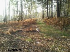 """(2) zwegel het hondje 