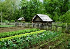 Succession planting is an effective technique to amplify the vegetable yield from a permaculture garden. Read more about succession planting The Farm, Mini Farm, Farm Gardens, Outdoor Gardens, Succession Planting, Companion Planting, Starting A Garden, Seed Starting, Living Off The Land