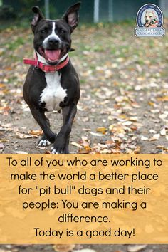 Happy Pit Bull Awareness Day to all of you!Enjoy this day of celebration and education with your community and the dogs. Your hard work is ...