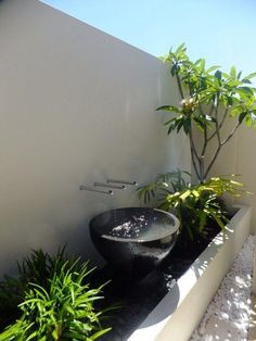 Modern Tropical Garden Design Ideas, Pictures, Remodel, and Decor Tropical Landscaping, Tropical Garden, Outdoor Landscaping, Modern Tropical, Luxury Landscaping, Small Gardens, Outdoor Gardens, Contemporary Water Feature, Contemporary Kitchens