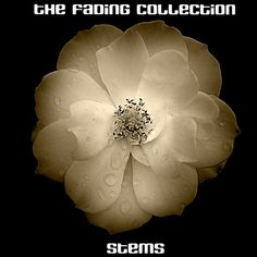 The Fading Collection - Stems