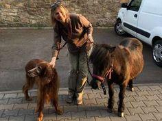 Herrenloses Pony in Rodgau eingefangen | Rodgau