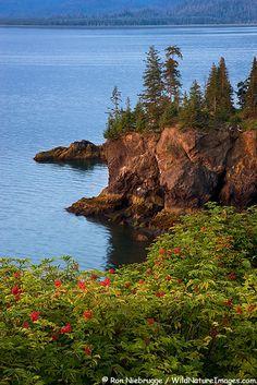 Halibut Cove, Kachemak Bay, Alaska