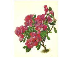 Watercolor Botanical Illustration by BotanicalVintageArt on Etsy