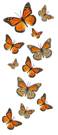 Details about Monarch Butterfly Temporary Tattoos - 5 Sheets - 55 Butterflies Monarch Butterfly Temp Hips Tattoo, Fingers Tattoo, Foot Tattoos, Temporary Tattoos, Small Tattoos, Sleeve Tattoos, Gun Tattoos, White Tattoos, Tattoo Pain