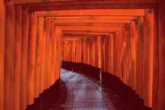 Tori gates of Inari shrine in Kyoto. A stunning spectacle but a struggle to get a photo without a million people in it. Patience prevailed and I nabbed this little beauty #fb