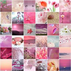 Pink + Nature + Amazing Photography = Naturally Delightful… | Flickr