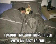 The German Shepherd....steals girlfriends.