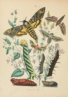 heaveninawildflower:  Plate from 'Museo Entomologico. Le...