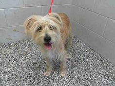 SAFE --- Adopted recently from this shelter. Back now as a stray! Good Lord people. Keep your dogs inside your homes! #A460308 Chip hold until 10/29 I am a male, tan and white Terrier mix. Shelter staff think I am about 1 year old. I have been at the shelter since Oct 18, 2014.  I may be available for adoption on Oct 29, 2014...City of San Bernardino Animal Control-Shelter. https://www.facebook.com/photo.php?fbid=10203783881135068&set=a.10203202186593068&type=3&theater