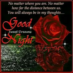 Good Night sister,have a peaceful sleep,God bless,xxx❤❤❤✨✨✨