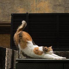 眠気覚ましの。 #cat #ねこ