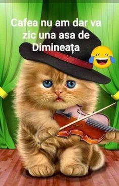 Good Morning, Motivation, Cats, Buen Dia, Gatos, Bonjour, Cat, Kitty, Good Morning Wishes