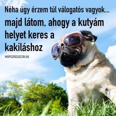 Néha úgy érzem túl válogatós vagyok   mopszos cuccok, mopsz gondolatok, mopsz minden mennyiségben, élet mopszokkal Pugs, Wayfarer, Mens Sunglasses, Minden, Pug Dogs