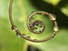 dew spiral