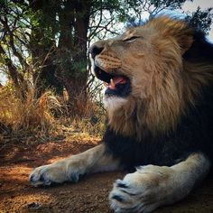 Great King!  - by Kevin Richardson