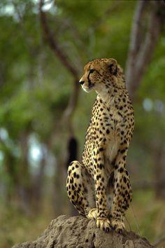 Réserve Mala Mala © Office du tourisme d'Afrique du Sud. Voyage sur mesure en Afrique du Sud : http://www.uniktour.com/fr/voyage-afrique-du-sud