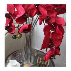 Found it at Wayfair - Luxury Silk Butterfly Orchid Stem