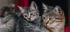 Découvrez dans cet article complet quelles sont les véritables missions des chats dans notre vie et pourquoi ils nous sont utiles.