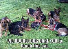 don't touch the cat!! and don;t even think about it.. #germanshepherd
