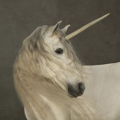 Marie-Cecile Thijs, Unicorn. For auction @ Christie's on 23 March. All proceeds go to Young in Prison.