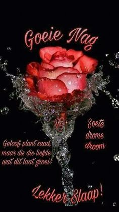 Good Night Wishes, Good Night Quotes, Good Morning Good Night, Good Night Massage, Goeie Nag, Goeie More, Afrikaans Quotes, Good Morning Greetings, English Quotes