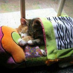 Vicini Vicini per la nanna al calduccio ♡   Dolci Sogni #a-mici !  #Buonanotte !   #Goodnight #Sleeptime #sleep #catsofinstagram #cats #instacat #catsgram #cutecats #sweetcats #lovelovelove #lovecat #cats #pets #animals #photooftheday #catsofinstagram #ilovemycat #nature #catoftheday #lovecats   #catsmylove #Repost #gatti #dolcigatti #dolcicuccioli #ioamoglianimali #MIAO :-)