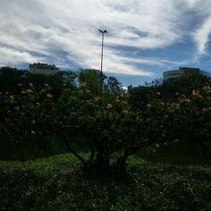 Dia lindo em Porto Alegre no Parcão  #catracapoa  Foto: @allan_hipolito