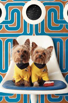 Star Trek Dogs