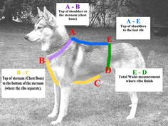 Harness Measuring Guide. Canicross Harness.