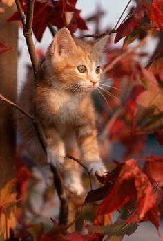 Stock photo and image search - Kimballstock Orange Tabby Cats, Autumn Trees, Cats And Kittens, Beautiful Pictures, Stock Photos, Animals, Dear Friend, Hugs, Kisses