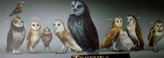 Legend of the Guardian:  The owls of ga'hoole