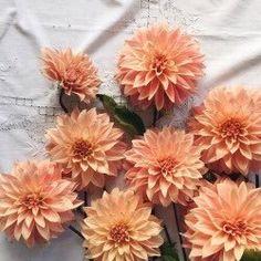flowers, orange, and peach image Orange Aesthetic, Aesthetic Colors, Flower Aesthetic, Beige Aesthetic, Aesthetic Pastel, Orange Pastel, Jandy Nelson, Plants Are Friends, No Rain