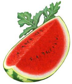 Watermelon Illustration, Food Clipart, Watermelon Art, Fruit Painting, Stock Art, Schneider, Cinnamon Apples, Logo Design Inspiration, Pear