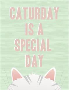 Caturday is a special day