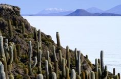 NASA uses the Uyuni salt desert in Bolivia to calibrate its satellites, because it is the largest and most reflective flat surface in the world.