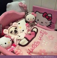 oh hello kitty. Cute Little Animals, Cute Funny Animals, Funny Animal Pictures, Dog Pictures, Hello Kitty Haus, Hello Kitty Items, Teacup Chihuahua, Chihuahua Love, Cute Puppies