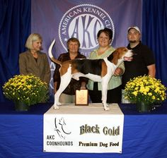 Treeing Walker Coonhound the newest breed of dog to be fully recognized by the AKC.