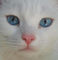 i just had a dream where i adopted a kitty that looked just like this one here... he cuddled me a bunch, it was awesome.