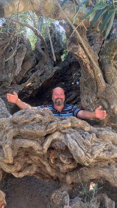 Der Olivenbaum Strahl eine Energie. Hab so etwas noch nie vorher erlebt.